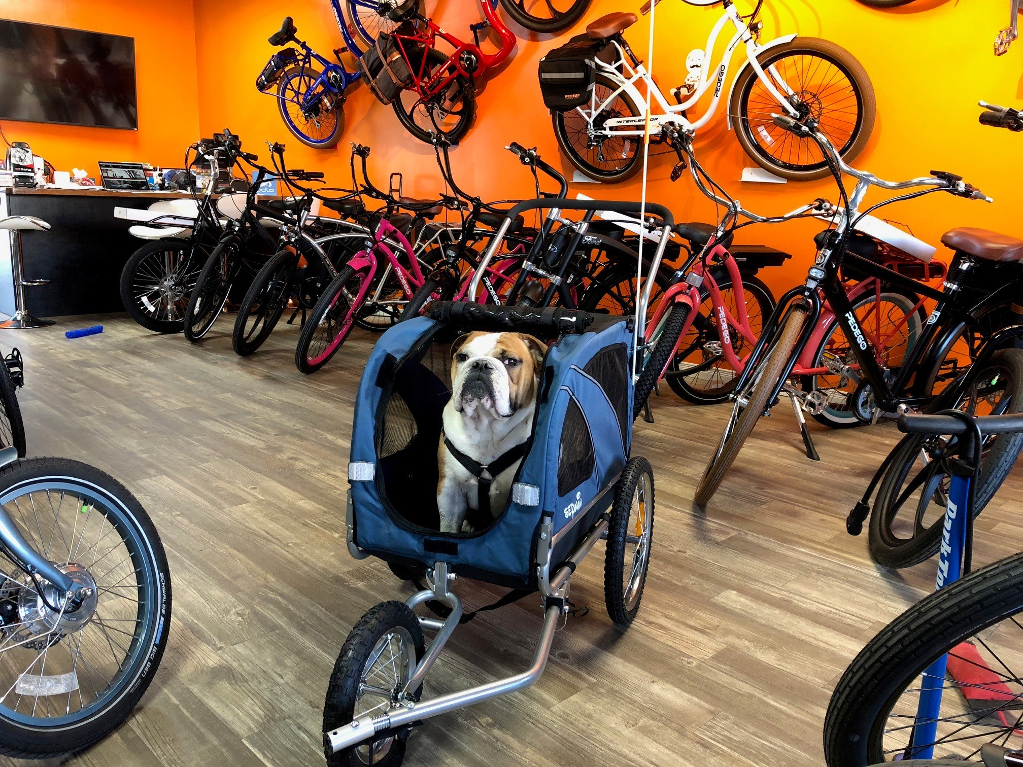 Pedego Kawartha Lakes Electric Bikes Dogs
